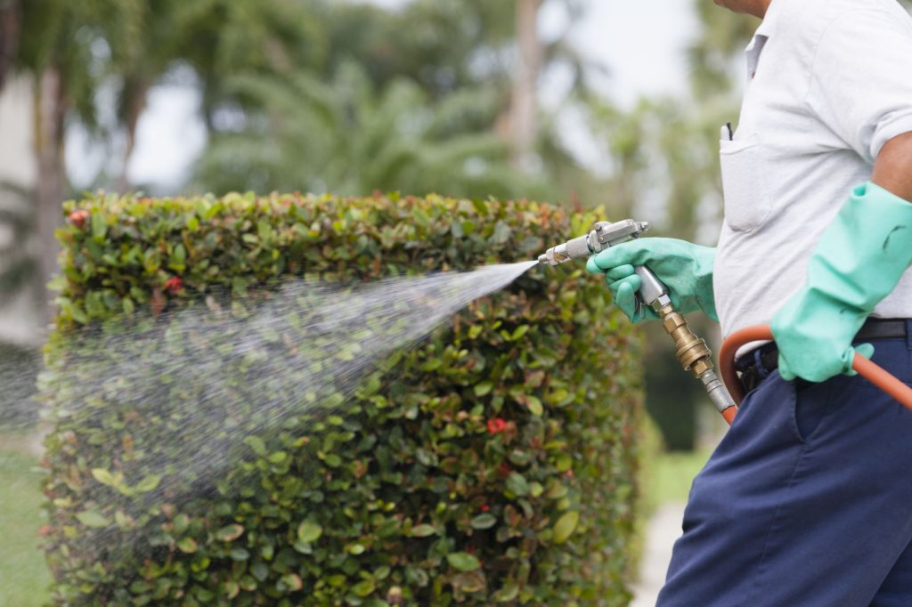 pest spraying