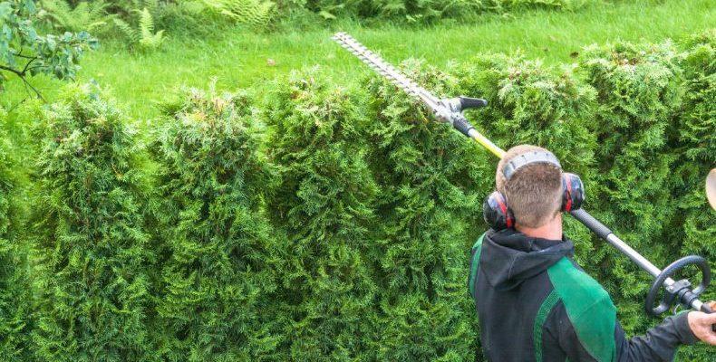 ipm shrub cutting