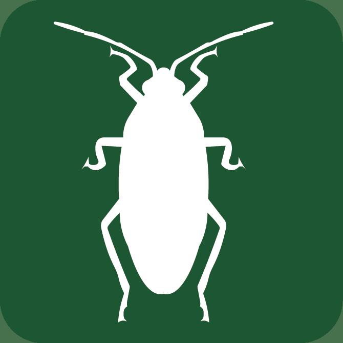 roach pest control
