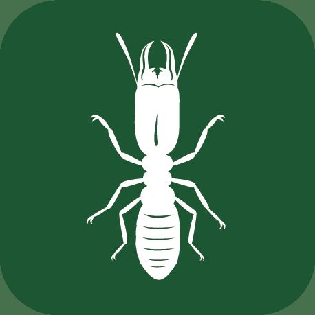 termite company