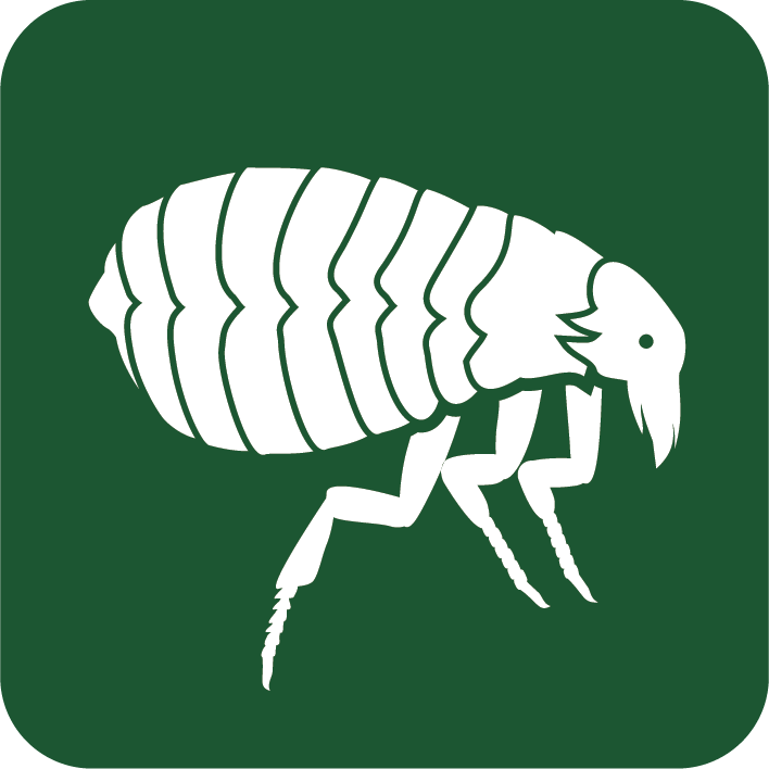 flea removal company